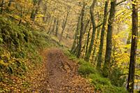 Pathway though autumn woodland at Shircombe Slade near Dulverton in the Exmoor National Park, Somerset, England.
