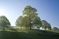 Morning spring sunlight in the countryside at Old Hill near Wrington, North Somerset, England.