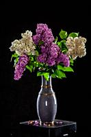White and purple branches of lilac in vase on black background. Spring branch of blooming lilac on the table with black background. Fallen lilac flowe...