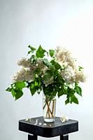 White branches of lilac in glass vase on gray background. Spring branch of blooming lilac on the table with gray background. Fallen lilac flowers on t...
