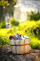 Flowers in sunny garden.