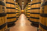 Oak casks in the cellar for the resting of liquor Amaro Braulio, Bormio, Sondrio province, Valtellina, Lombardy, Italy.