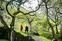 Way to Castell y Bere, Dysynni Valley, Gwynedd, Wales.