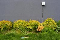 A power junction box on a dark grey side of a building behind yellowish bushes, green grass, and a mlticoloured box, Toronto, Ontario, Canada.
