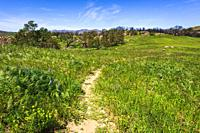 Hiker on the West Meadow Trail at Charmlee Wilderness Park, Malibu, California USA.