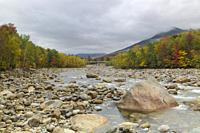 Autumn foliage along the East Branch of the Pemigewasset River, just below the Loon Mtn. Bridge, in Lincoln, New Hampshire on a cloudy autumn day.
