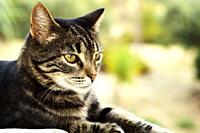 Portrait of a domestic cat outdoors.