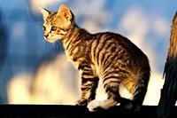 Portrait of a tabby kitten outdoors.