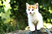 Close up of a beautiful white and red kitten sitting on a stone outdoors.