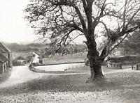 The Martyrs' Tree, a sycamore at Tolpuddle in Dorset, England, regarded by some as the birthplace of the British trades union movement. From The Marty...