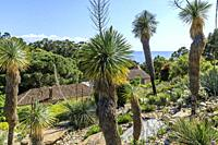 France, Var, Rayol Canadel sur Mer, the Domaine du Rayol, Mediterranean garden, property of the Conservatoire du littoral, the Californian garden with...