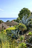 France, Var, Rayol Canadel sur Mer, the Domaine du Rayol, Mediterranean garden, property of the Conservatoire du littoral, the Californian garden and ...