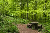 A picnic table in Leigh Woods near Bristol, North Somerset, England.