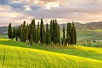 Sunset on Cypress Grove Val d'Orcia Tuscany Italy World Location.
