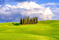 Cypress Grove at Sunset in Val d'Orcia Tuscany Italy World Location.