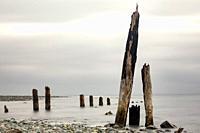 Old wooden pier pilings (long exposure) at Jordan River - near Sooke, Vancouver Island, Britiish Columbia, Canada.