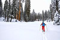 Skier in the Giant Forest, Sequoia National Park, California USA.