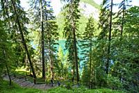 Turquoise water of the lake Lago di Braies, Pragser Wildsee surrounded by pine forest and mountains in the Prags Dolomites in South Tyrol, Italy, Euro...