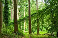Dunster Forest is one of the oldest forest in Exmoor.