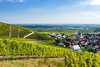 village Katzenthal with vineyards, Alsace, France, view to the Upper Rhine Valley.
