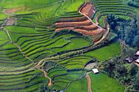 Rice field terraces in the mountains, Sa Pa, Lao Cai Procince, Vietnam, Asia. .