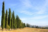 San Giovanni d'Asso, Tuscany, Italy, Europe.
