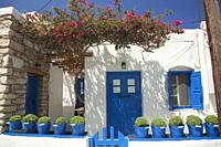 Buckets with basil flowers (basilicum) in front of a traditional whitewashed house in the old town Chora or Hora, Folegandros, Cyclades Islands, Greek...