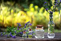 Bottles of essential oil with fresh blooming hyssop twigs in the background.