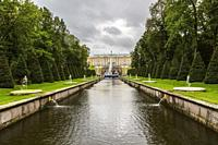 Canal and water fountains bordered by conical evergreen trees, Peterhof palace grounds and gardens in late summer, Petergof, Saint-Petersburg, Russia,...