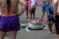 Crowd surrounding dead hawksbill sea turtle (Eretmochelys imbricata) killed by boat propeller in Ladrilleros, Pacific Coast of Colombia.