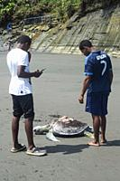 Young men look at dead Hawksbill sea turtle (Eretmochelys imbricata) killed by boat propeller in Ladrilleros, Pacific Coast of Colombia.