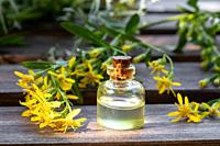 A bottle of essential oil with fresh European goldenrod, or Solidago virgaurea twigs.