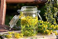 Preparation of herbal tincture from fresh European goldenrod, or Solidago virgaurea plant.