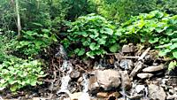 Waterfall water flowing from mountain forest landscape Fast flowing liquid among the rocks rocks and green tree beech nature.