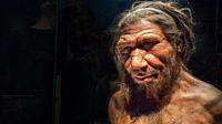 Human evolution gallery . Model of male Homo neanderthalensis, Natural History Museum, London, England, UK, This image could have imperfections as itâ...