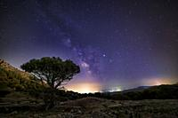 Milky Way over Concejo pinewood in Cadalso de los Vidrios. Madrid. Spain. Europe.