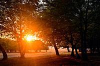 Autumn scene Misty Old Forest with Sun Rays.