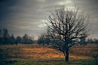Spooky Halloween landscape with wild nature and old dead tree.