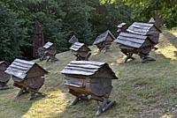 ancient beehives in the Beekeeping Museum, Stripeikiai, Aukstaitija National Park, Lithuania, Europe.