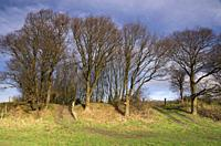 Trees on the Mirnser cliff near the small hamlet Rijs in the Dutch province Friesland.