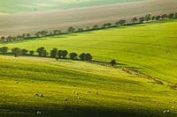 Winter afternoon on the South Downs in West Sussex, England.