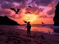 Flying Frigate birds being fed by hand on a beach on the island of Fernando de Noronha, Brazil.
