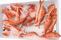 Fresh red mullet for sale in a UK fishmonger market stall.
