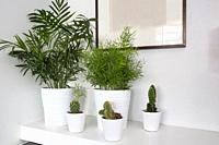 Houseplants in white pots and a white background, living room decoration modern design with blank painting.