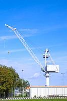 White crane in Venica, Italy.