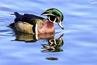 Burnaby Lake Regional Park, Burnaby, British Columbia, Canada.