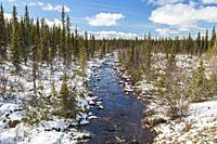 Muddus jokk in springtime with running water, snow on the side, spruce and birch trees around, Gällivare county, Swedish Lapland, Sweden.