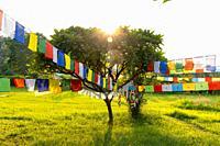 Prayer flags hanging at garden in Lumbini, Nepal.