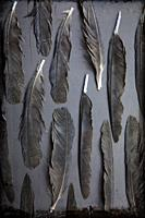 Feather on Grey Ground.