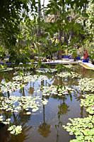 Pond at Majorelle Gardens in Marrakesh, Morocco.